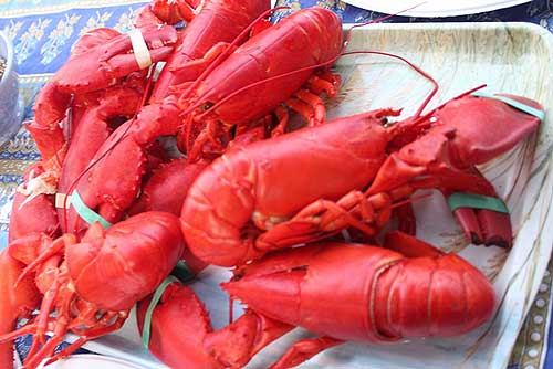 Enjoy LobsterFest at Back Beach Presented By Rockport Rotary Club